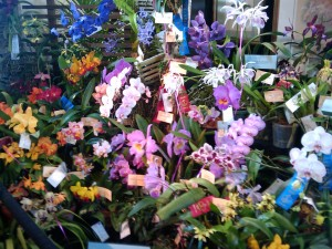 Last Weekend in March Brings an Exotic Orchid Show and Sale to Austin, TX