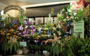 Last Weekend in April Brings an Exotic Orchid Show and Sale to Austin, TX