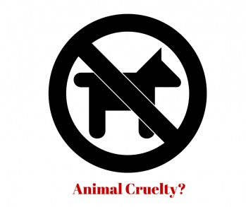 West Palm Beach Criminal Defense Lawyer Discusses FL Animal Cruelty Charges