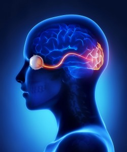 Traumatic Optic Nerve Damage: Academic Physician Life Care Planning Perspective