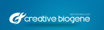 Creative Biogene Will Reduce Your DNA Synthesis Cost With Oligonucleotide Pool