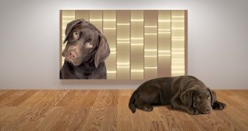 DNA Art Gallery Launches New Pet Product Line