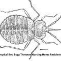 Boca Nursing Home Neglect Lawyer Joe Osborne Says Bed Bugs Pose A Major Threat