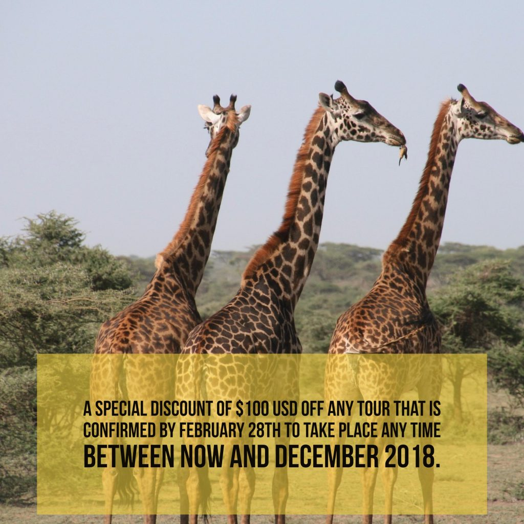 New Year Savings On Special Zara Trekking And Safari Packages