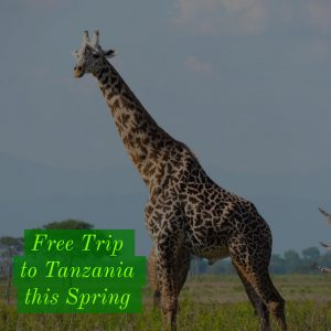 Zara Tours Offers Springtime Specials In Tanzania