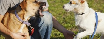 What Pet Sitters Need To Know About Dog Bites As Vacation Season Approaches