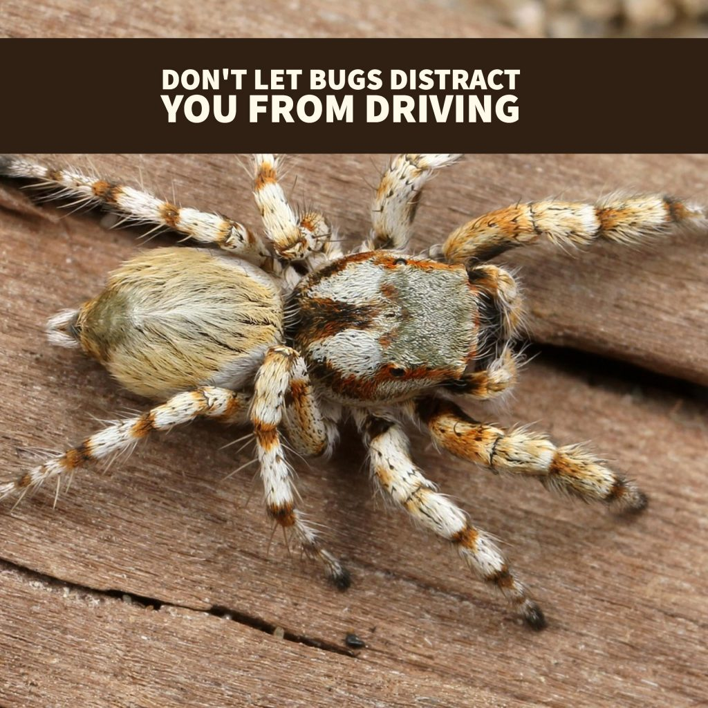 Don't Let Bugs Bug You Says Boca Car Accident Lawyer Joe Osborne