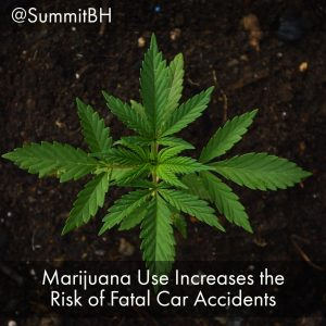 Marijuana Use Increases The Risk Of Fatal Car Accidents