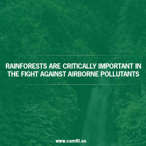 Are Rainforests Natural Air Filters?