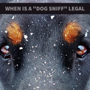 Dallas Drug Defense Attorney Explains When a Dog Sniff Violates Your Rights