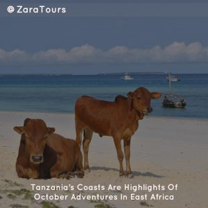 Tanzania's Coasts Are Highlights Of October Adventures In East Africa