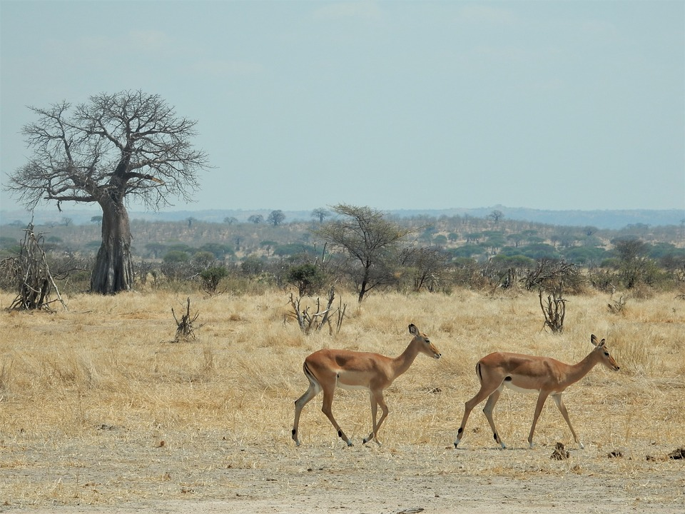 New Year, New Lodge, New Life: New Reasons to Book with Zara Tours