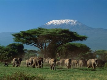 Kilimanjaro Climb and Safari in Tanzania: A Special Offer for April